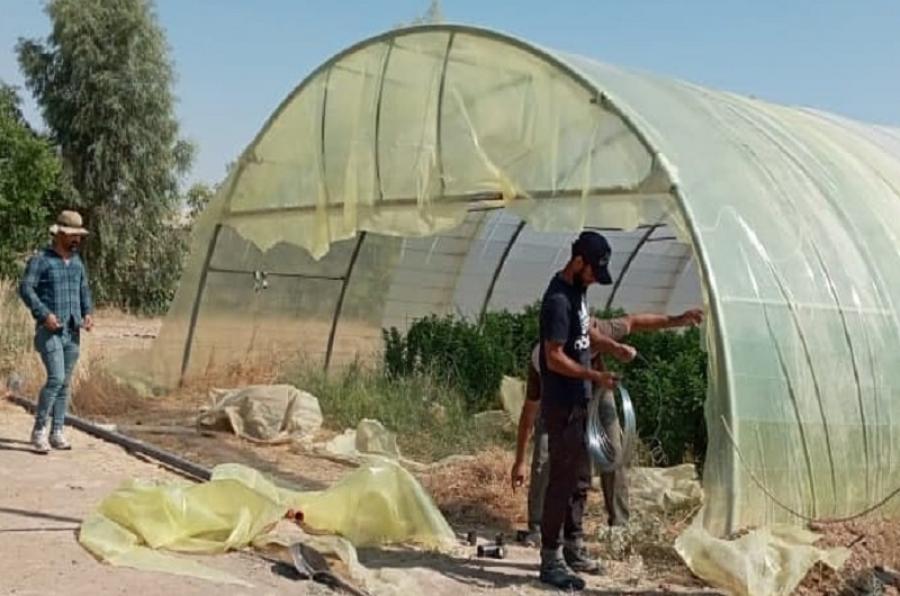 كلية الزراعة تنفذ حملة لصيانة البيوت البلاستيكية في محطة البحوث والتجارب الزراعية