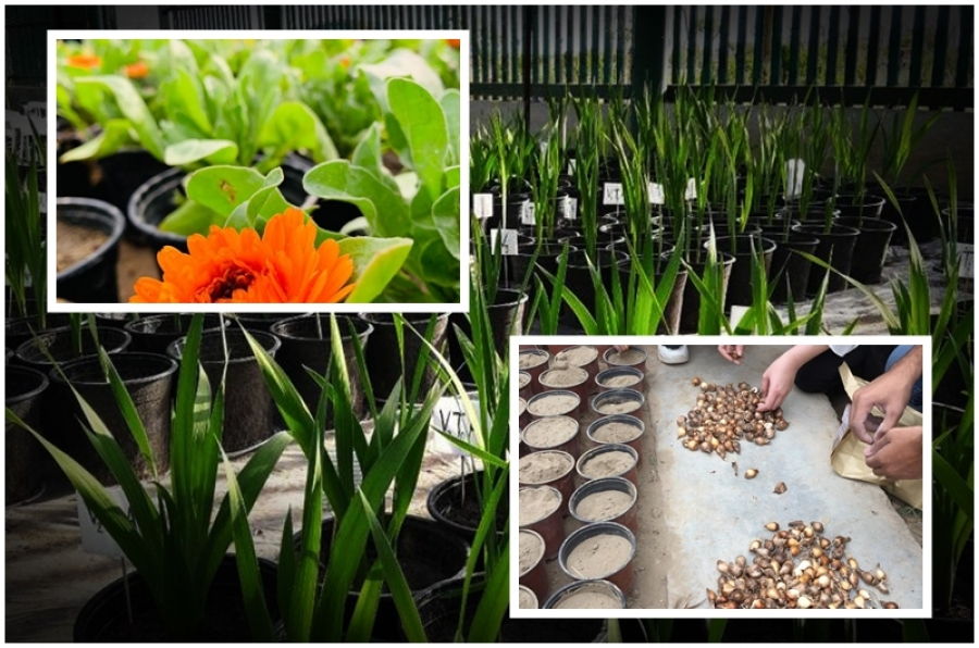 Practical lessons on Cultivation and propagation of ornamental plants