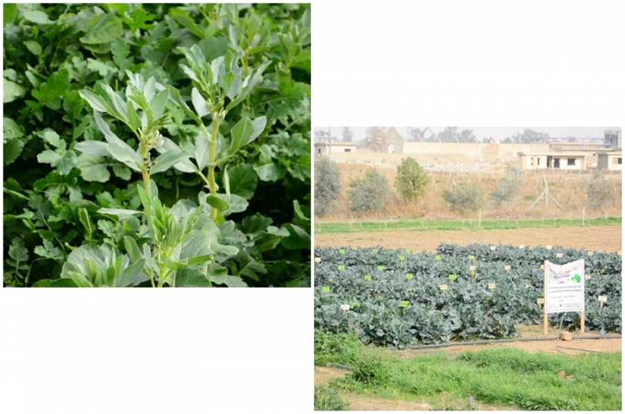 Latest postgraduate research studies at agricultural research station in College of Agriculture